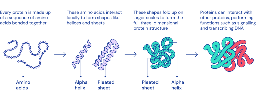This is how Google owned Lab cracks Protein folding problem that stumped biologists for 50 years 3